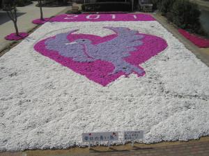 芝桜2011