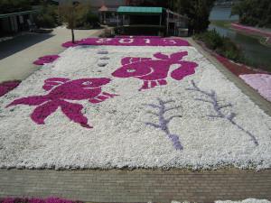 芝桜2013