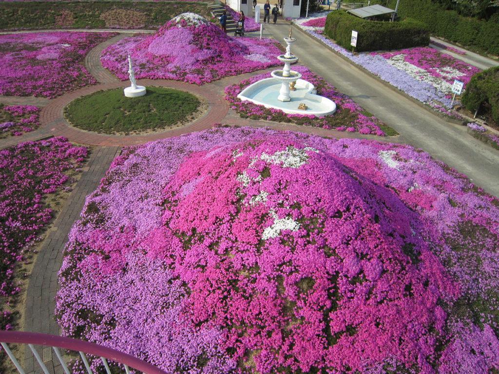 カフェジャルダン の芝桜