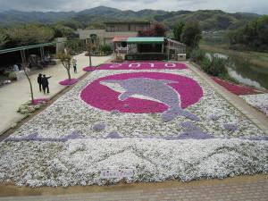 芝桜2010